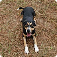 Adopt A Pet :: DENVER - Panama City, FL