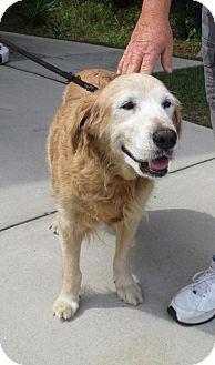 Golden Retriever Dog for adoption in Murrells Inlet, South Carolina - Dixie #3