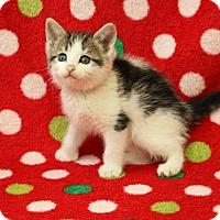 Adopt A Pet :: Harvest - Yucaipa, CA