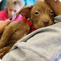 Adopt A Pet :: Mia (MD) - New York, NY