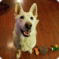 Adopt A Pet :: Titan - Oakland, MI
