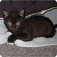 Adopt A Pet :: DeeDee - Davis, CA