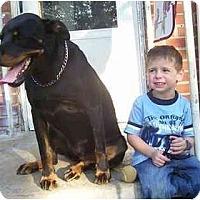 Adopt A Pet :: Alexa - Chandler, IN