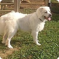 Adopt A Pet :: Nola - Foster, RI