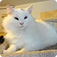 Adopt A Pet :: Kendra - Broomall, PA