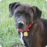 Adopt A Pet :: Noelle! - Sacramento, CA