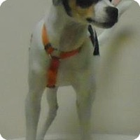 Adopt A Pet :: Lance - Gary, IN