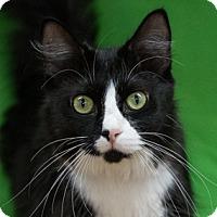 Adopt A Pet :: Elektra - Calgary, AB