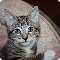 Adopt A Pet :: Jamie (LE) - Little Falls, NJ