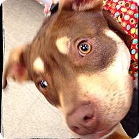 Adopt A Pet :: Orion - Johnson City, TX
