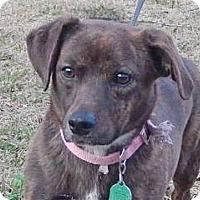 Adopt A Pet :: Bonnie - Locust Fork, AL