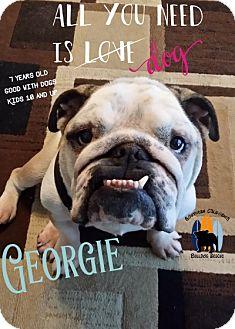 English Bulldog Dog for adoption in Santa Ana, California - Georgie