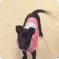 Adopt A Pet :: Dana - Fair Oaks Ranch, TX