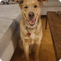 Adopt A Pet :: CHARLEY - Winnipeg, MB