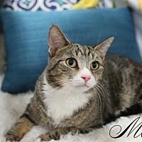 Adopt A Pet :: Max $45 Male - knoxville, TN