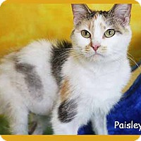 Adopt A Pet :: Paisley - South Bend, IN