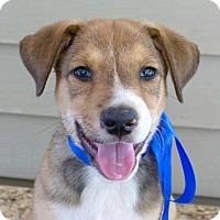 Adopt A Pet :: Paulie - Baton Rouge, LA