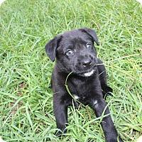 Adopt A Pet :: Savannah - Weeki Wachee, FL