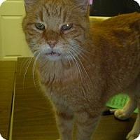 Adopt A Pet :: Otis - Hamburg, NY