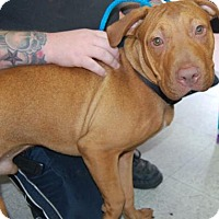 Adopt A Pet :: Orlando - Brooklyn, NY