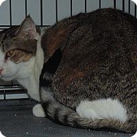 Adopt A Pet :: Daniel - Jackson, MO