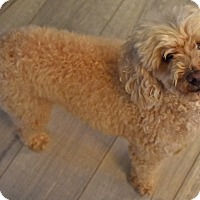 Adopt A Pet :: Jovi - Woodland, CA