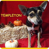 Adopt A Pet :: Templeton - Batesville, AR