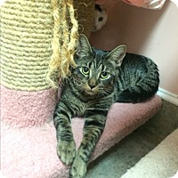 Adopt A Pet :: Tommy - Lunenburg, MA
