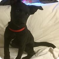 Adopt A Pet :: Grizzly - Phoenix, AZ