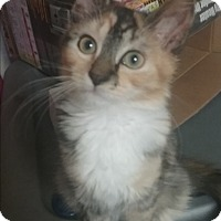 Adopt A Pet :: Autumn - wyoming valley, PA