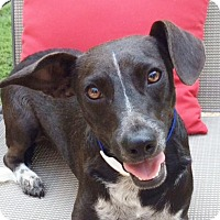 Adopt A Pet :: Logan/house broke ~B - Locust Fork, AL