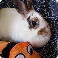 Adopt A Pet :: Florence - Alexandria, VA