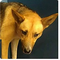 Adopt A Pet :: Nala - Springdale, AR