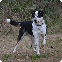 Adopt A Pet :: Remmy - Lebanon, MO