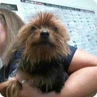 Adopt A Pet :: DASH - Tulsa, OK