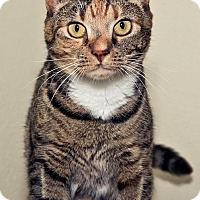 Adopt A Pet :: Peeka - Cashiers, NC