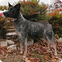 Adopt A Pet :: Sadie - Tyler, TX