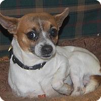 Adopt A Pet :: Little Bit - Manning, SC