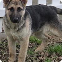 Adopt A Pet :: Stella - Yuba City, CA