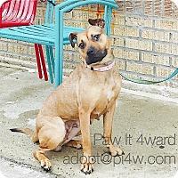 Adopt A Pet :: Madison - Cherry Hill, NJ