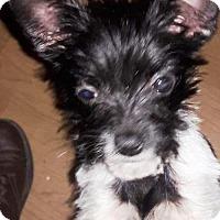 Adopt A Pet :: Doodle Bug - Fayetteville, GA