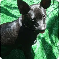 Adopt A Pet :: Rocky - Lake Forest, CA
