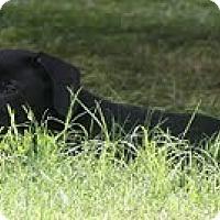 Adopt A Pet :: Gypsey - Brattleboro, VT