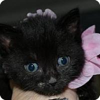 Adopt A Pet :: Blue Bell - Island Park, NY