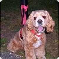 Adopt A Pet :: Muffy - Tacoma, WA
