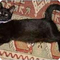 Adopt A Pet :: Marney - Portland, OR