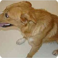 Adopt A Pet :: Pacey - Scottsdale, AZ