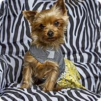 Adopt A Pet :: Brandi - Baton Rouge, LA