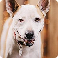 Adopt A Pet :: Bubble - Portland, OR