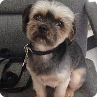 Adopt A Pet :: Skipper - Willington, CT